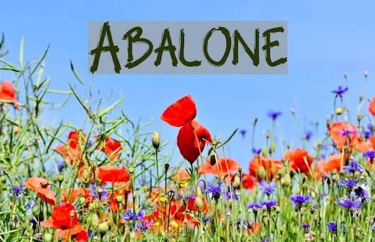 download Abolon Font