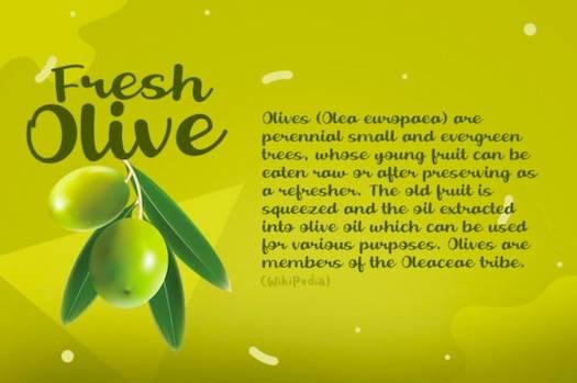 Fresh Olive Font download