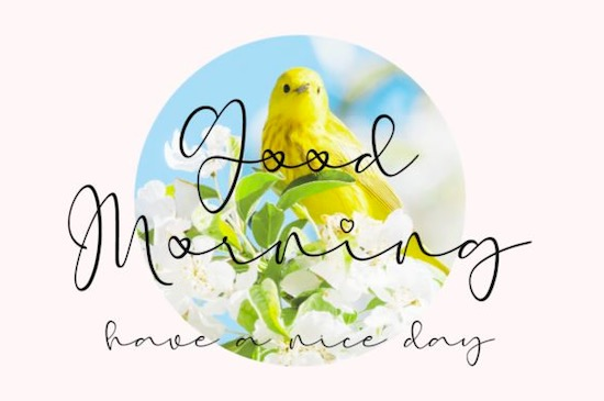Early Morning Birds font free