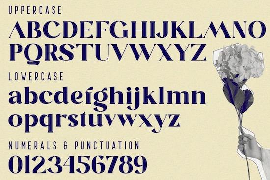 Blastula Font free
